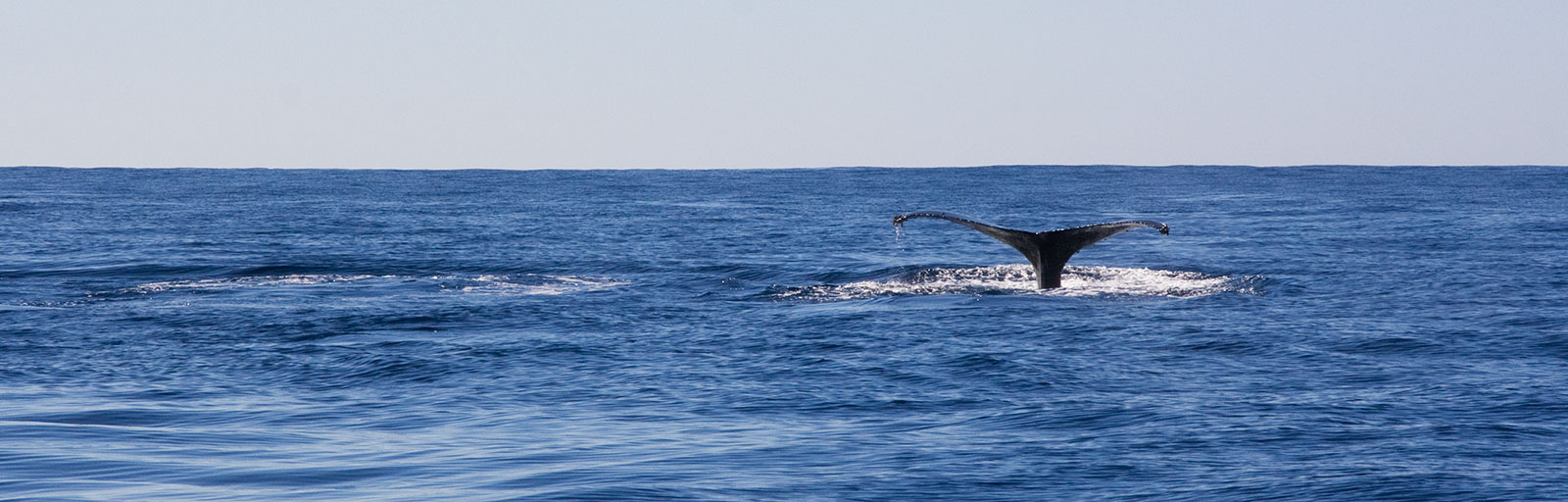 Whale Watching & Yoga Retreat in Mexico: Whale Tail