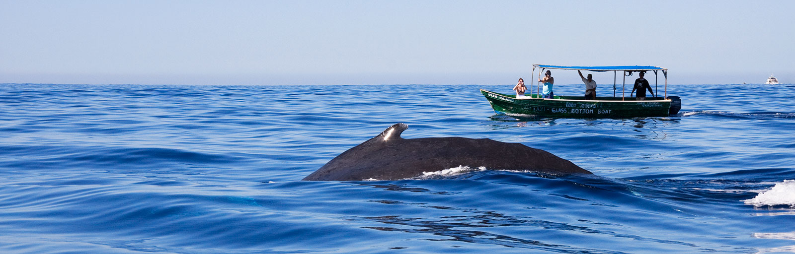 Best Yoga Retreats in Mexico: Whale Watching Yoga Retreat