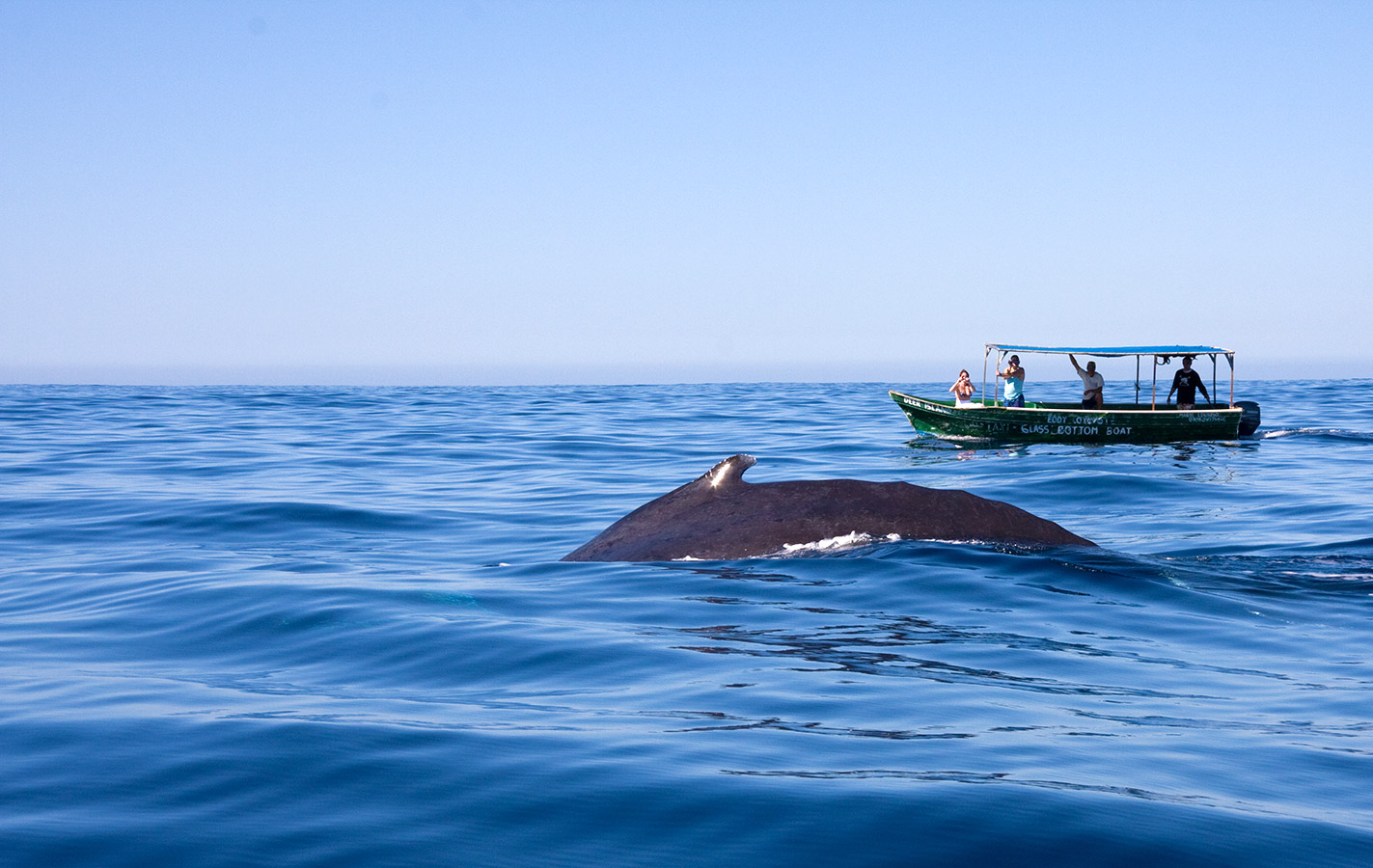 Whale Watching - Yoga Retreat - Mexico