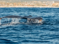 Majestic Whales - Yoga Retreat - Mexico