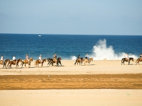Horseback Riding on the Beach - Yoga Retreat - Mexico