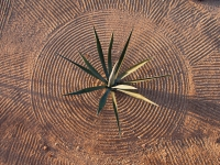 Raked Circle with Agave - Yoga Retreat - Mexico