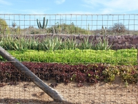 Lettuces and Vegetables - Yoga Retreat - Mexico
