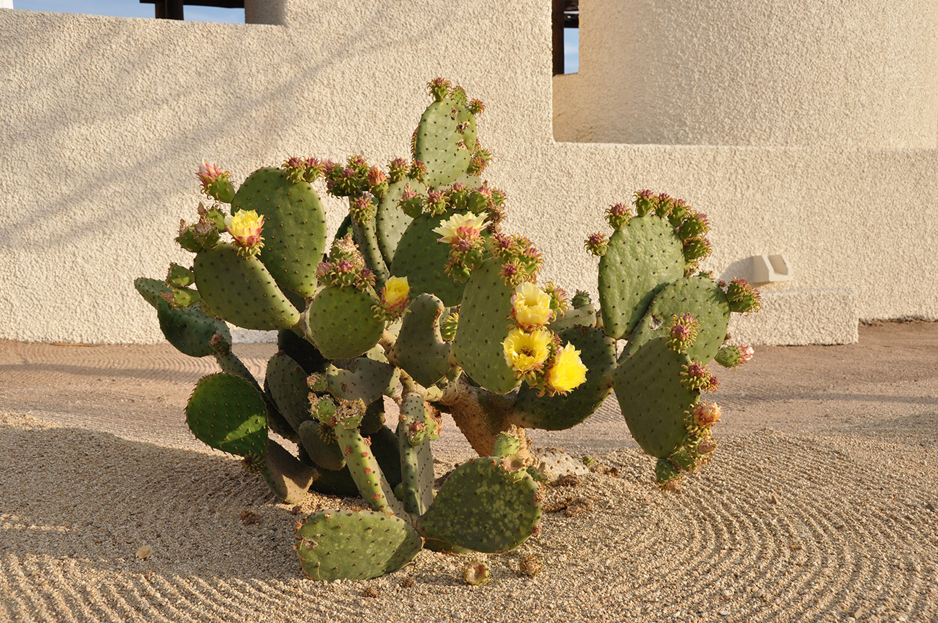 Nopales in Bloom - Yoga Retreat - Mexico
