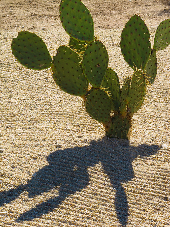 Nopal and Shadow - Yoga Retreat - Mexico