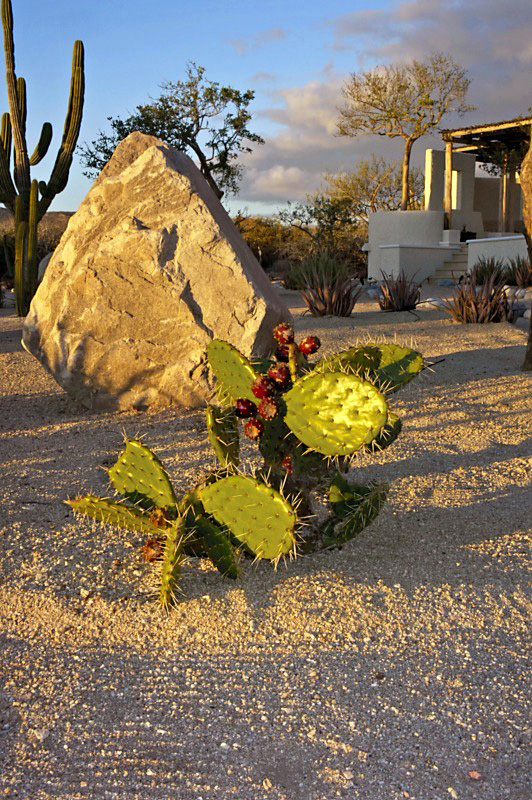 Cactus & Stone - Yoga Retreat - Mexico