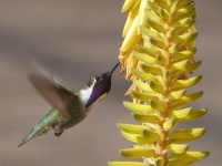 Hummingbird w/ Aloe - Yoga Retreat - Mexico