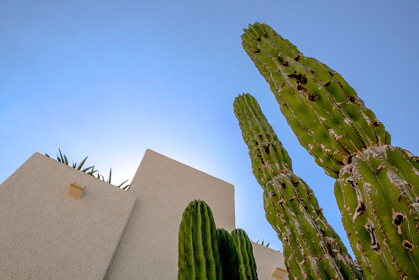 Cardon Cactus - Yoga Retreat - Mexico