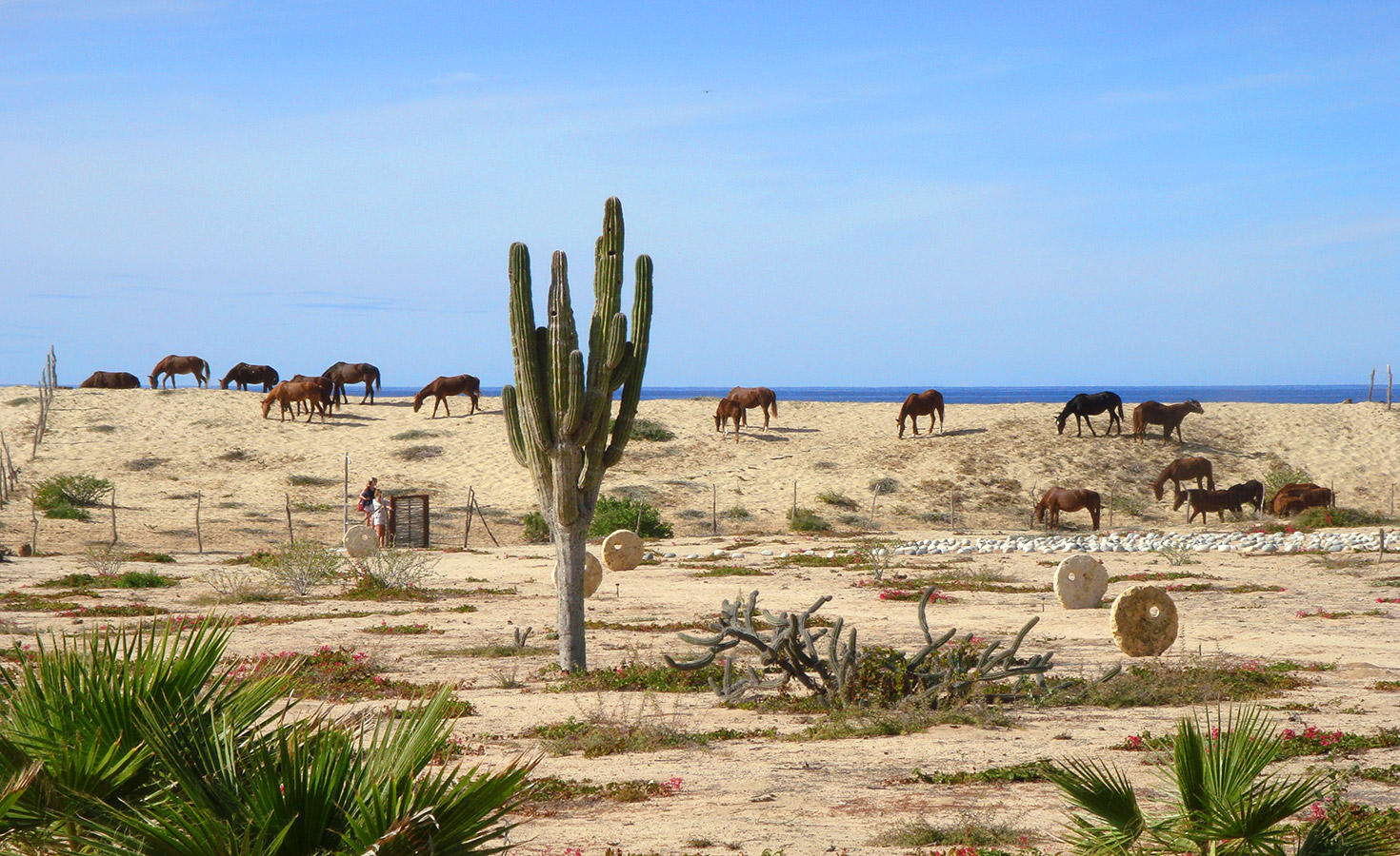 Neighborhood Horses Grazing on the Dune - Yoga Retreat - Mexico