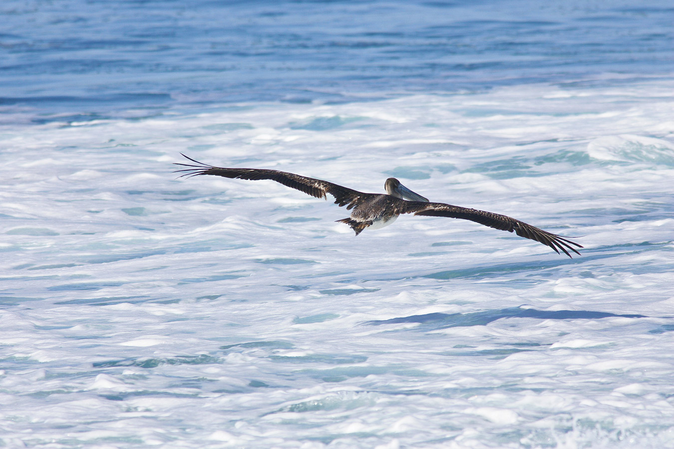 A Pelican Glides Above the Sea Foam - Yoga Retreat - Mexico