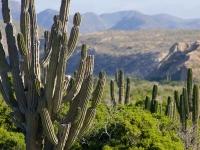 Cardon Cactus with Mountain Backdrop - Yoga Retreat - Mexico