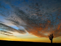 A Cactus Watches as the Setting Sun Fades - Yoga Retreat - Mexico