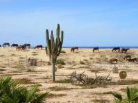 Neighborhood Horses Grazing on the Dune - Yoga Retreat - Mexico