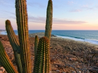 Pitaya Cactus Overlooking the Ocean - Yoga Retreat - Mexico
