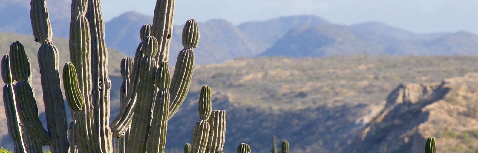 Yoga Retreat Scenics: Cactus and Mountains in the Baja Desert