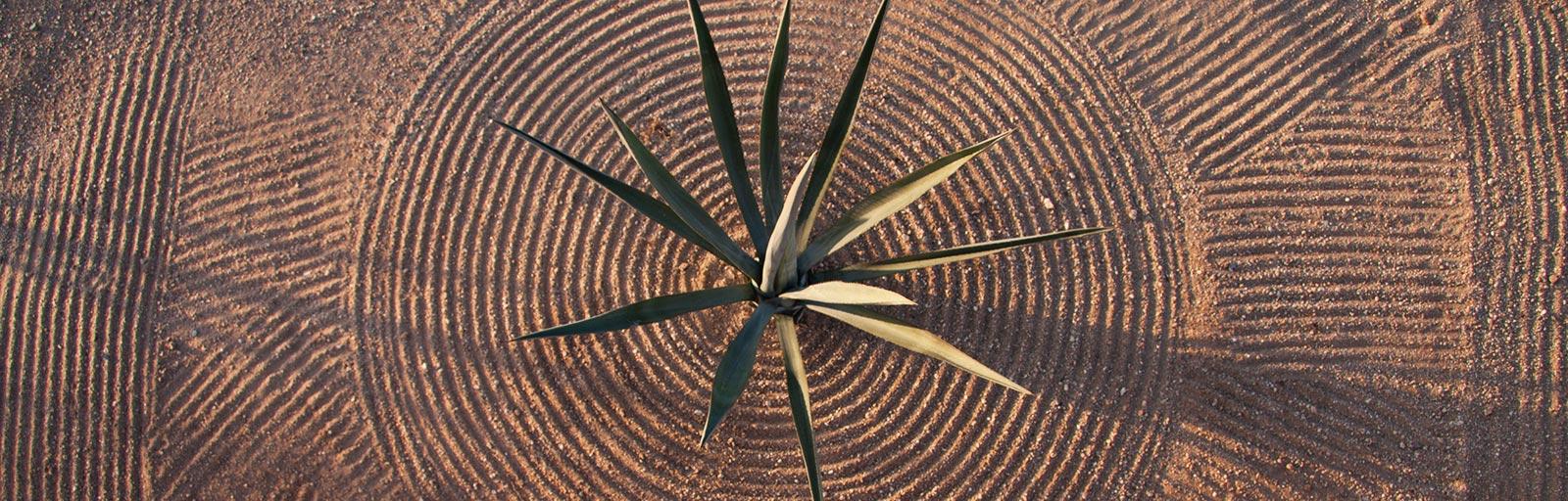 Meditation & Yoga Retreats in Mexico: Agave & Raked Sand