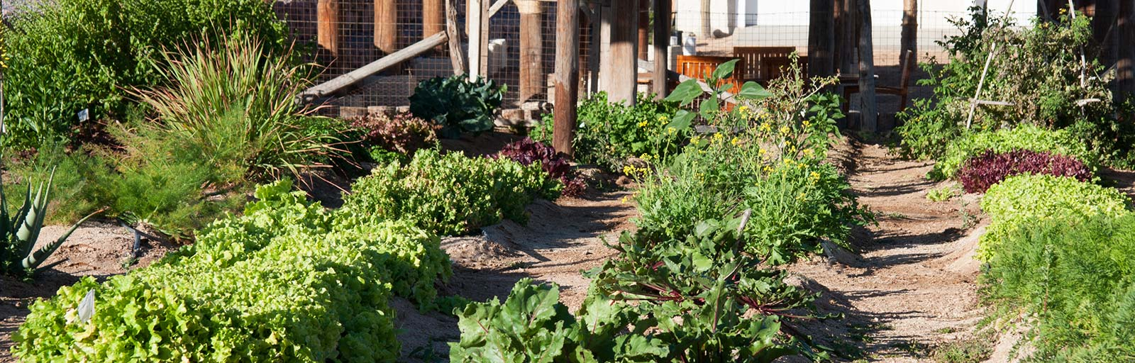 Gardens at Yoga Retreat Mexico: Organic Fruit, Vegetables, and Herbs