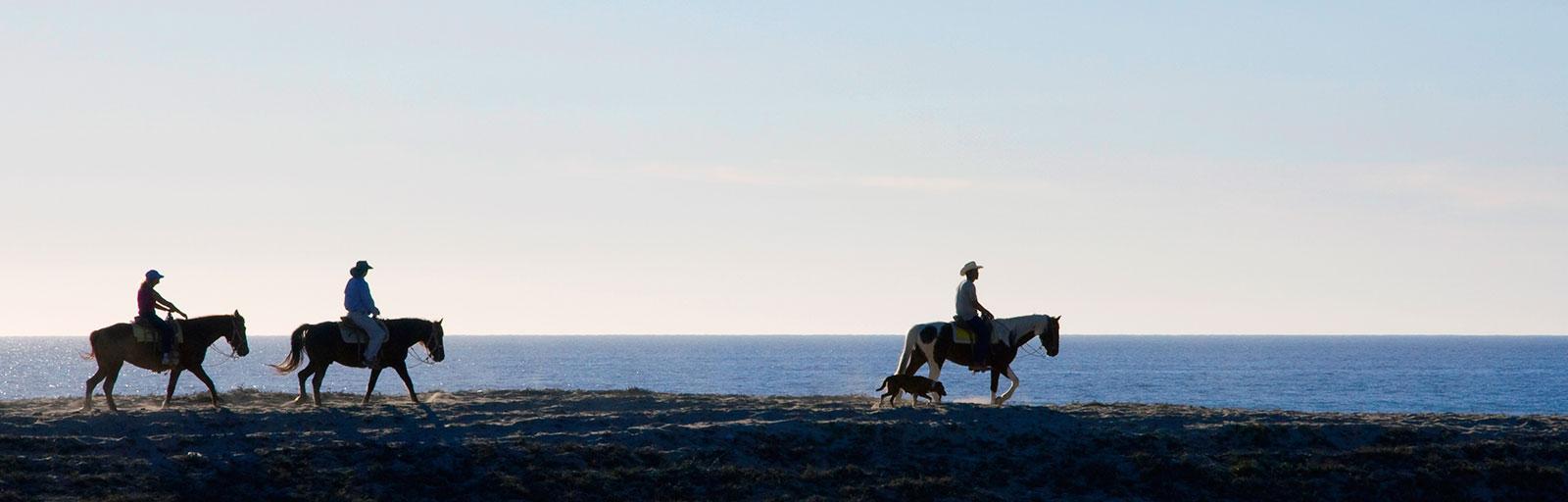 Horseback Riding & Yoga Retreat in Mexico: Walking the Dune