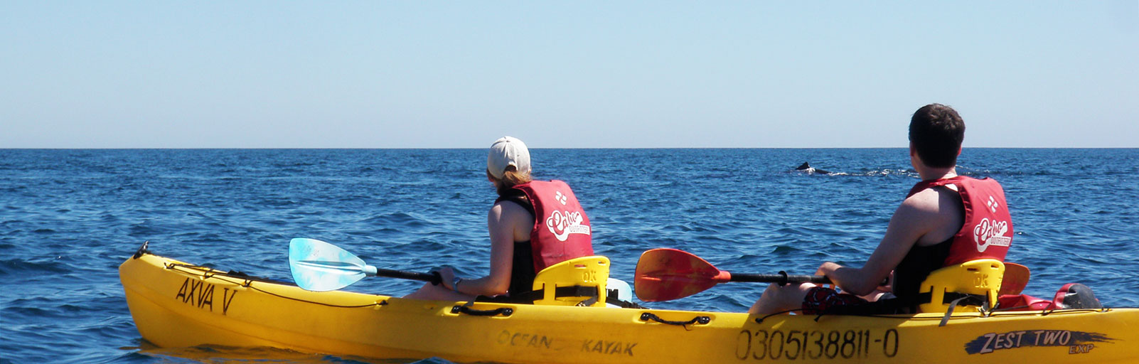 Sea Kayaking & Snorkeling on a Mexico Yoga Retreat: Watching Whales
